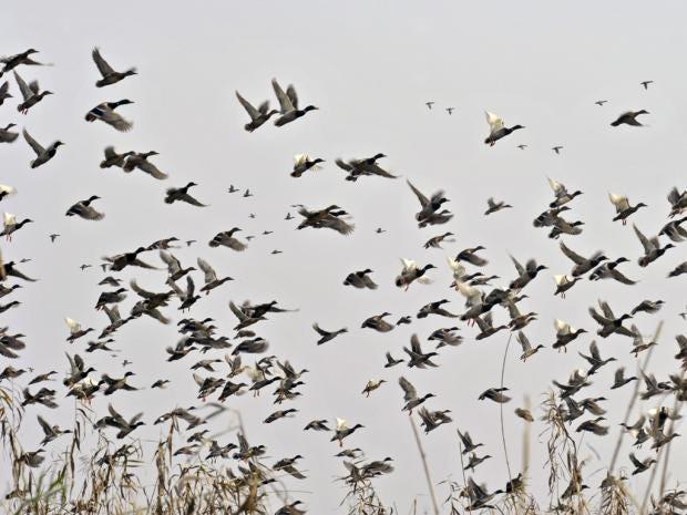 42-fly-the-nest-AFP.jpg