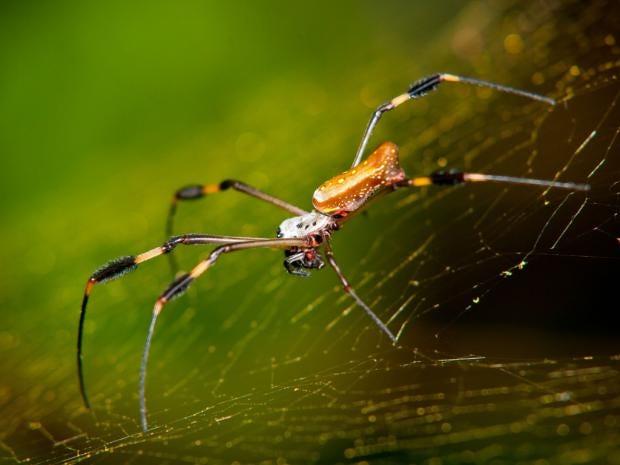 Pg-12-spider-alamy.jpg