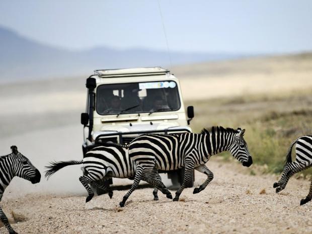 zebrasAFP.jpg