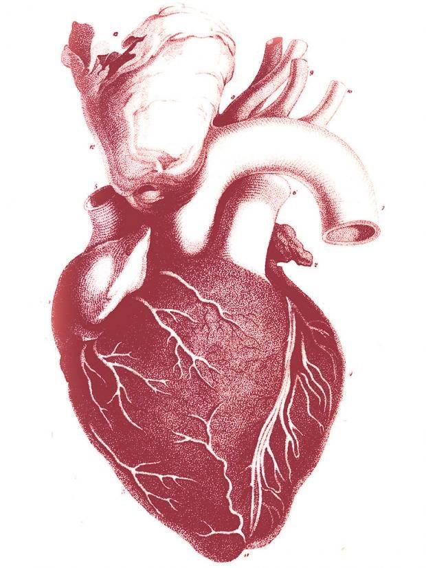 pg-10-heart-disease-ap.jpg