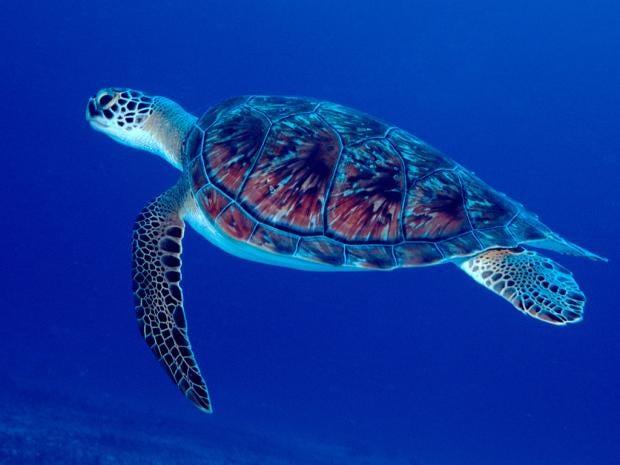 turtleAlamy.jpg