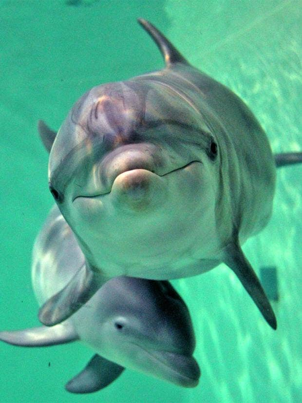 pg-26-dolphins-afp-getty.jpg