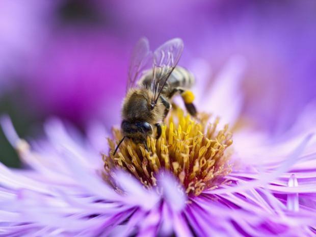 IA31-2-bee.jpg