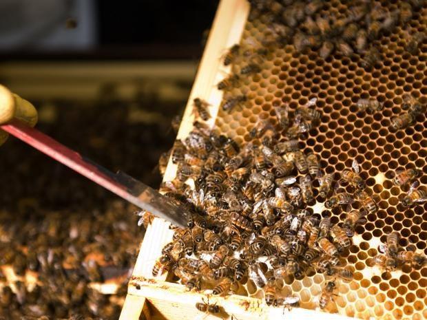 12-bee-afp.jpg