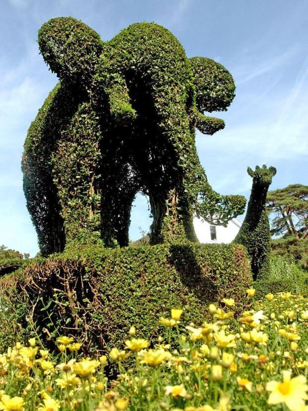 Pg-27-topiary-ap.jpg