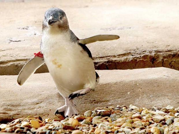 pg-8-penguin-rex.jpg