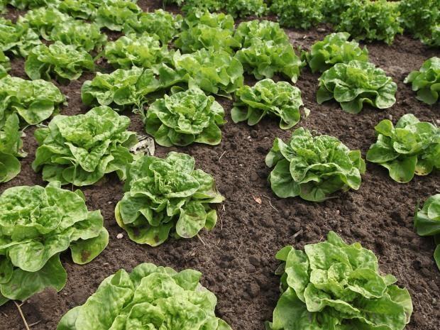 SU28-salad-gt.jpg