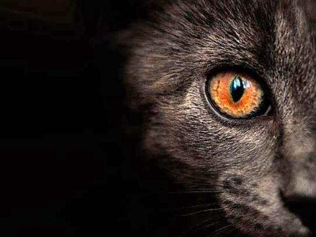 Pg-2-cats-flickr.jpg