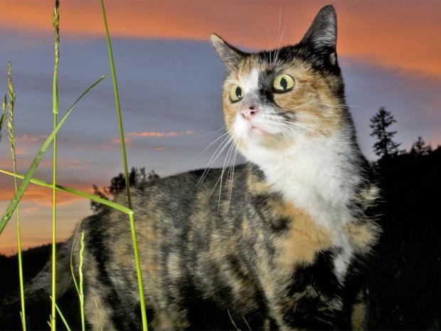 pg-2-cat-parasites-rex.jpg