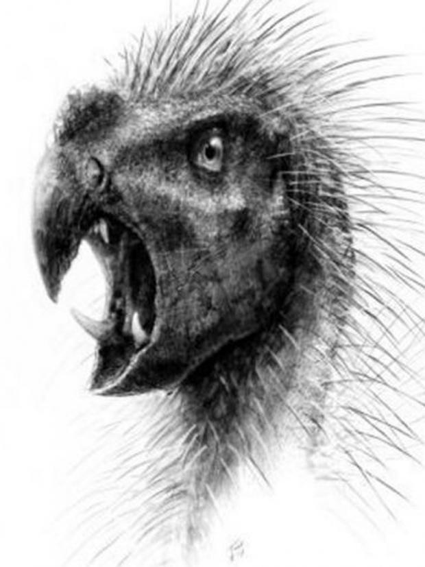 Pegomastax-africanus.jpg