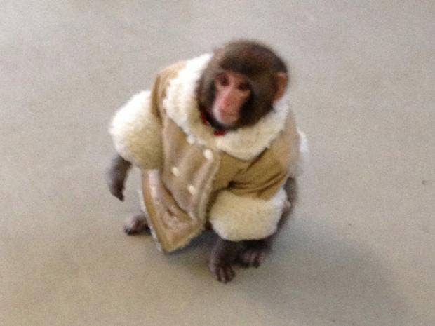 monkey-ap.jpg