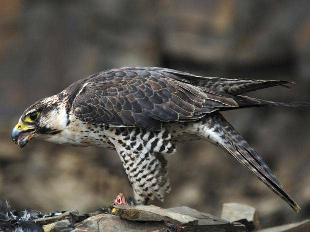 06-wildlifecrime-alamy.jpg