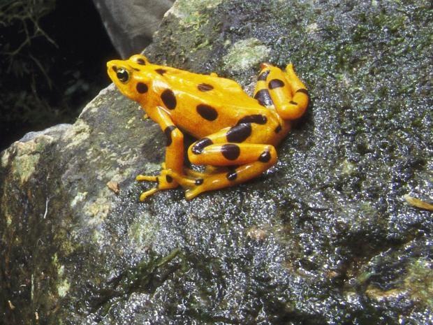06-franticfightfrogs-gt.jpg