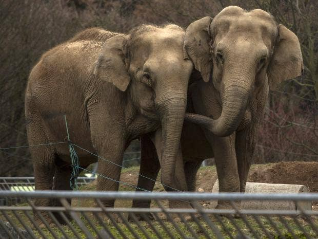 pg-30-elephants-ap.jpg