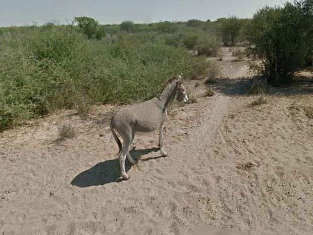 google-donkey.jpg