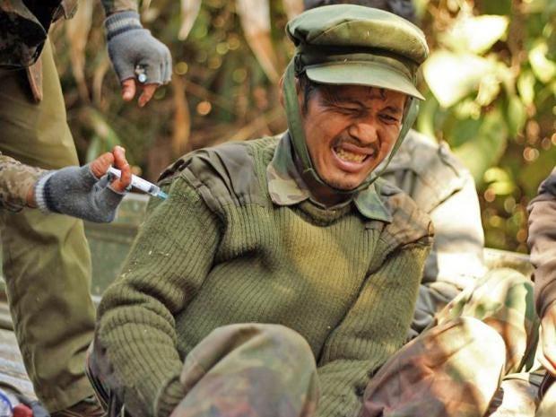 burmese-ap.jpg