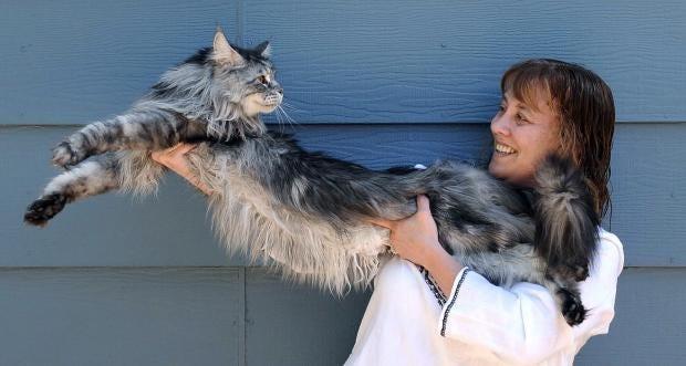 stewie-longest-cat.jpg