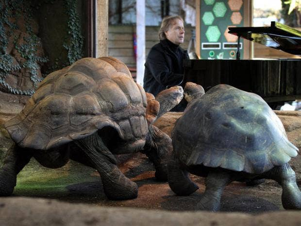 clayderman-tortoise-pa.jpg