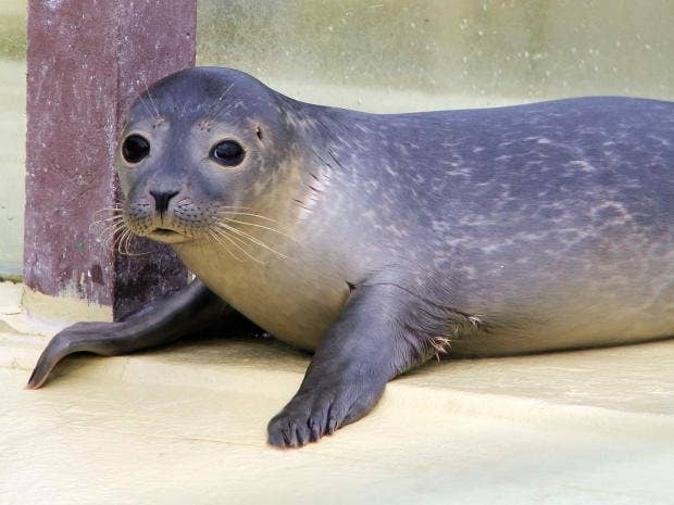 seals-sleep-gt.jpg