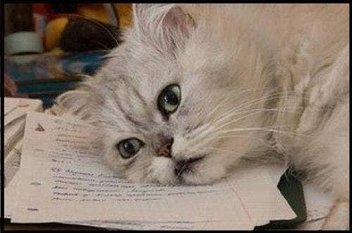 blog-cat-paperwork.jpg