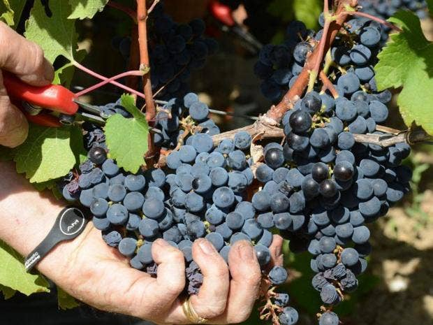 Perfect-wines-EPA.jpg