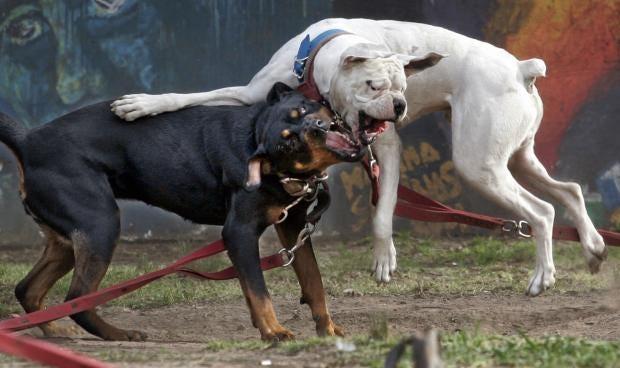 dogfight2.jpg