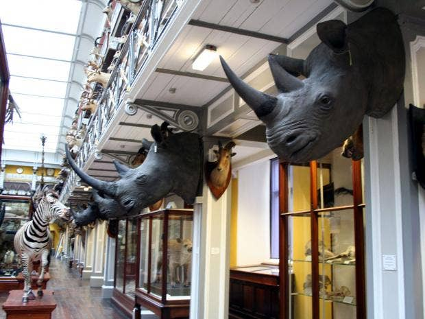rhino-heads-pa.jpg