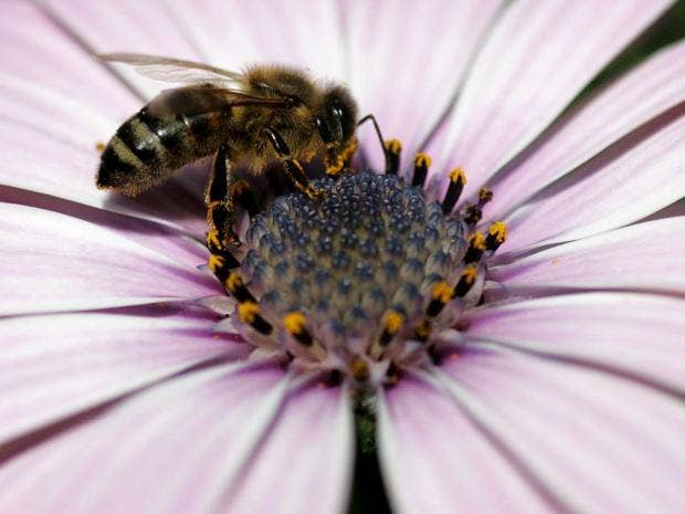 7-Bee-EPA.jpg