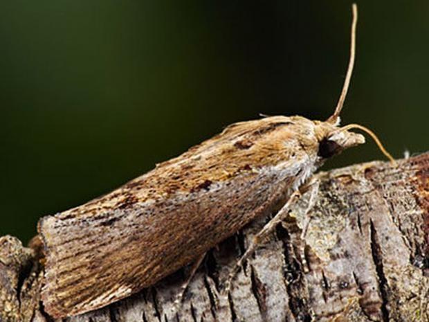 pg-8-moth-alamy.jpg