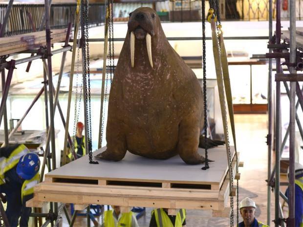 pg-28-walrus-braun.jpg