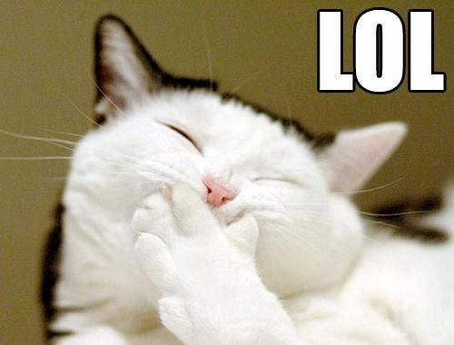 lol_cat.jpg