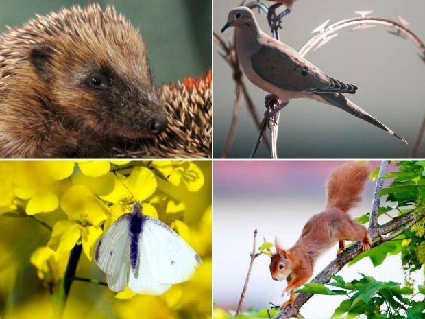 British-species.jpg