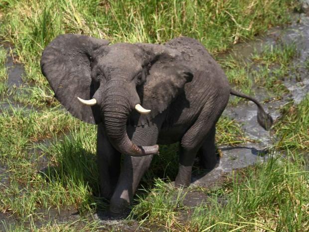 elephant-rt.jpg