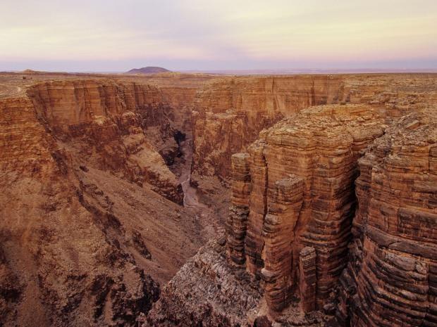 canyon.rex.jpg
