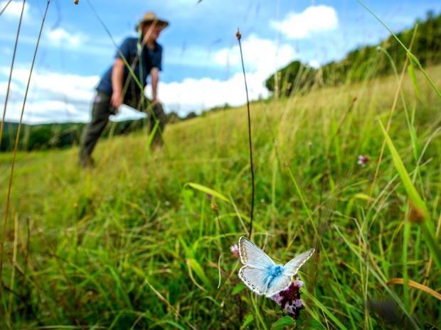 web-butterflies-1-beddall.jpg