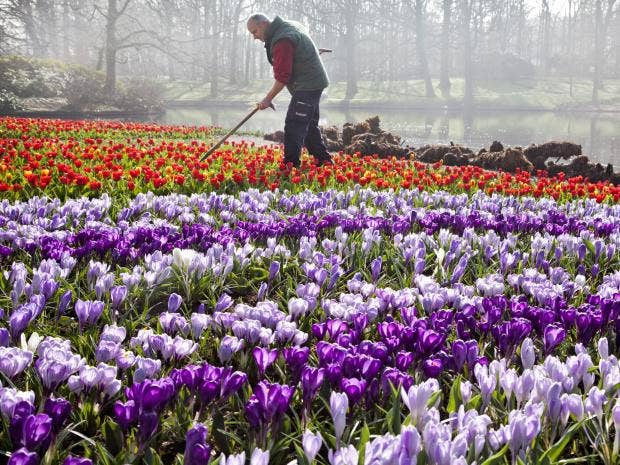 39-Keukenhof-AFP-Getty.jpg