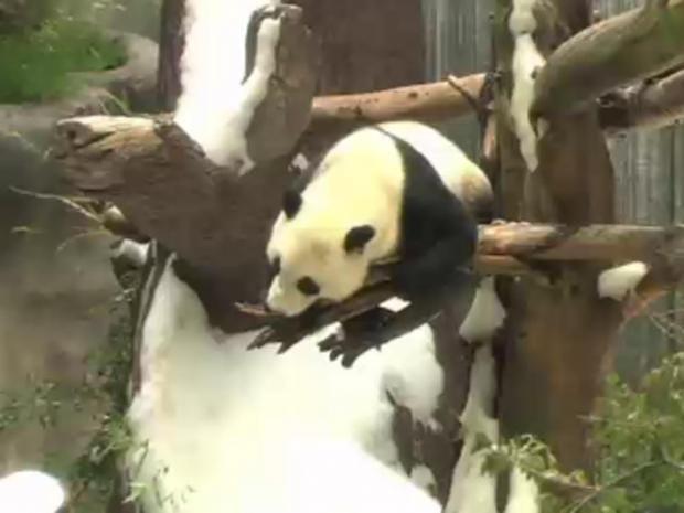 panda.jpg