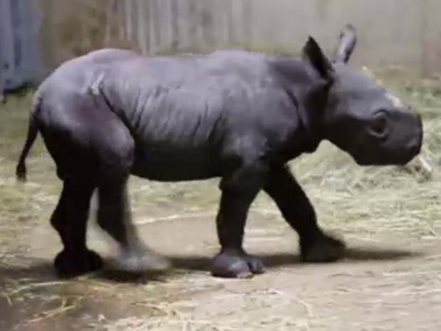 baby-rhino.jpg