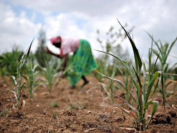 27-Kenyan-farmer-AFP-Getty.jpg