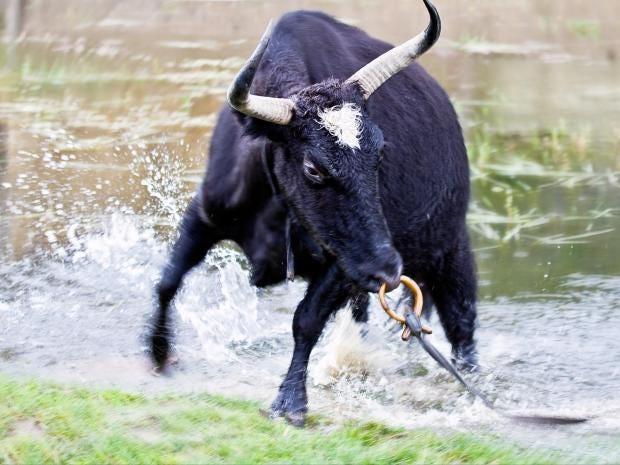 bull-getty-creative.jpg
