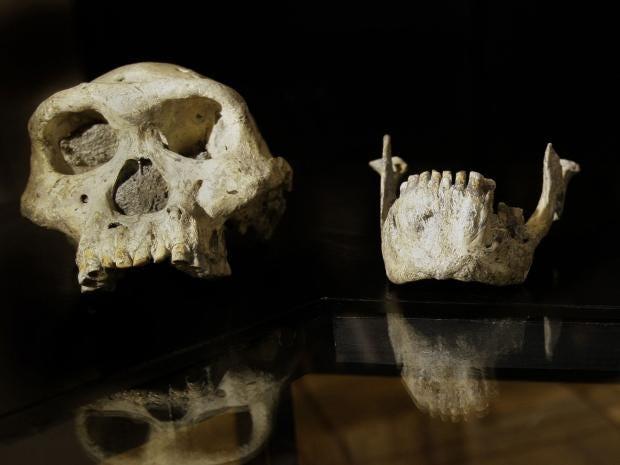 24-skull3-ap.jpg