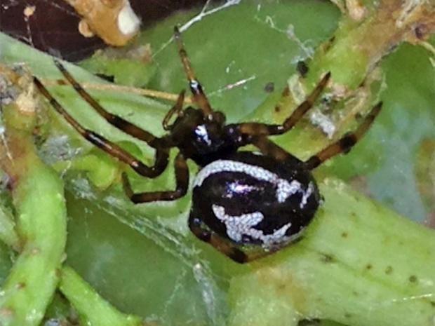 pg-22-spider-rex.jpg