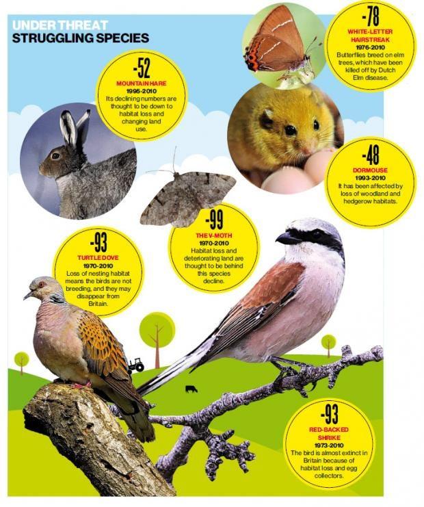 pg-28-wildlife-graphic.jpg