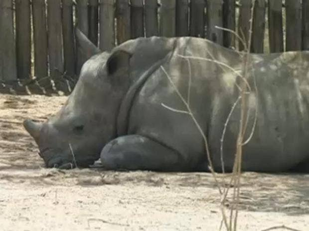 rhino-orphanage.jpg