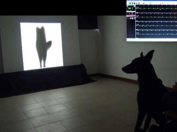 dogwagging-ap.jpg
