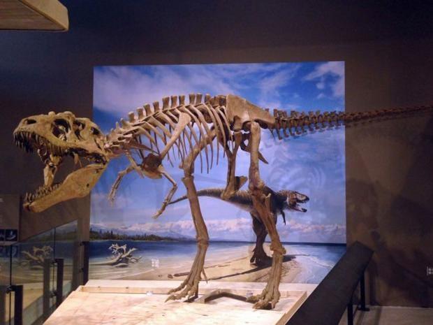 lythronax-argestes-dinosaur.jpg