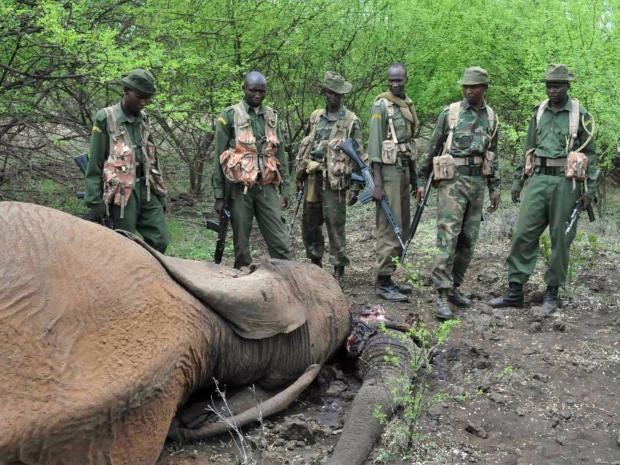 Elephant-AFP.jpg