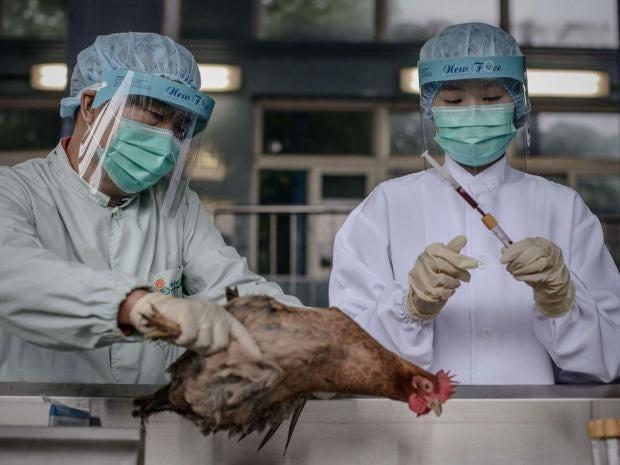 bird-flu-h7n9.jpg