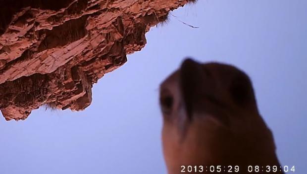 eagle-selfie.jpg