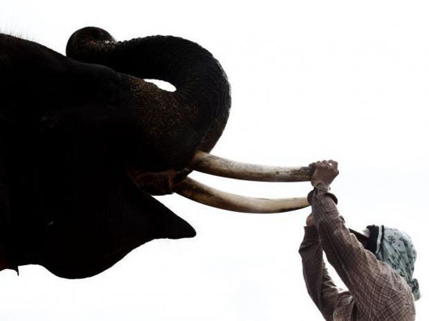 elephantGETTY.jpg